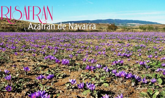Azafrán de Navarra, FRISAFRAN. Jóvenes Emprendedores de la Ribera de Navarra