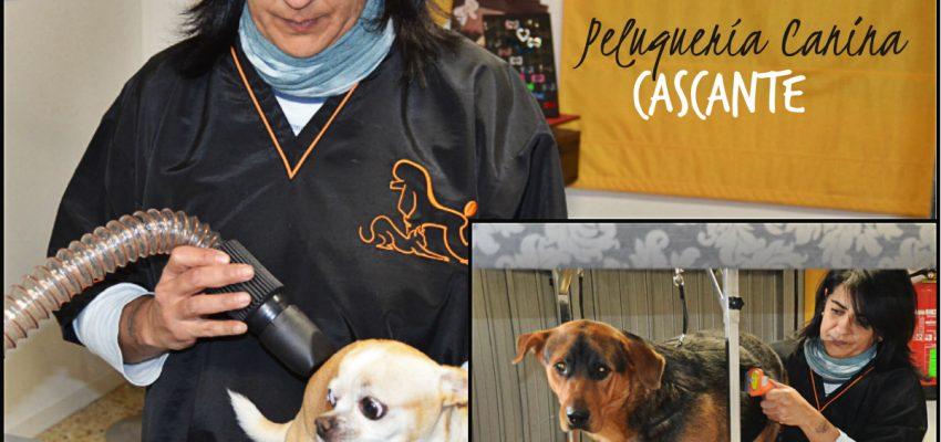 Nueva Peluquería Canina en Cascante; Pelukis