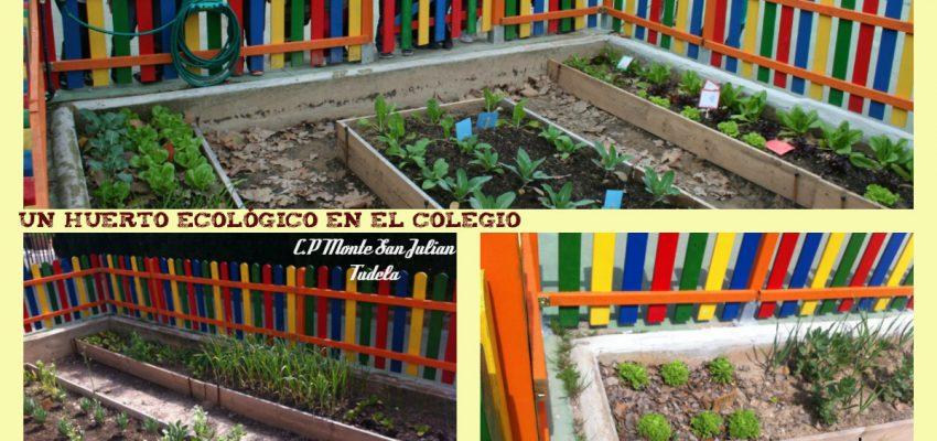 Un huerto ecológico en el colegio; CP Monte San Julian